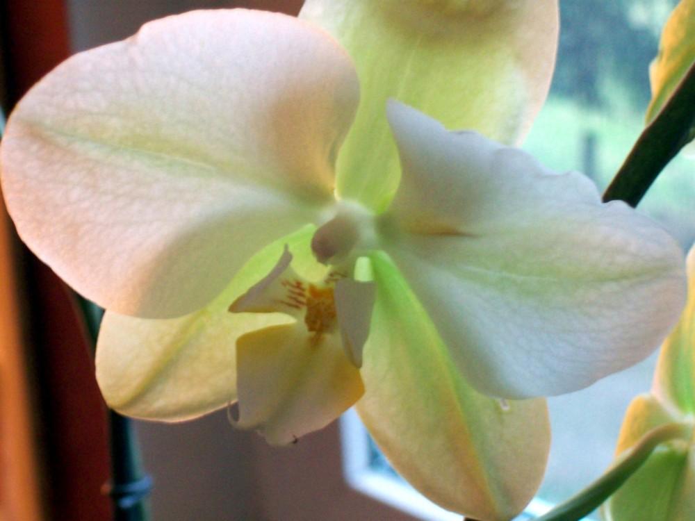 orchidee--aber nicht meine ;-)