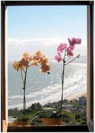 orchidee alla finestra nel golfo di Vasto