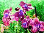 Orchidee anders