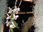 Orchidee aus Ausstellung