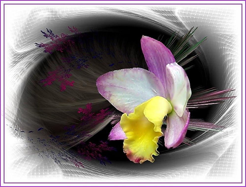 Orchidee aus dem Tropenhaus Dortmund