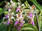 Orchidee Berggarten Hannover 3
