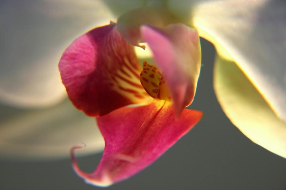 Orchidee!!!