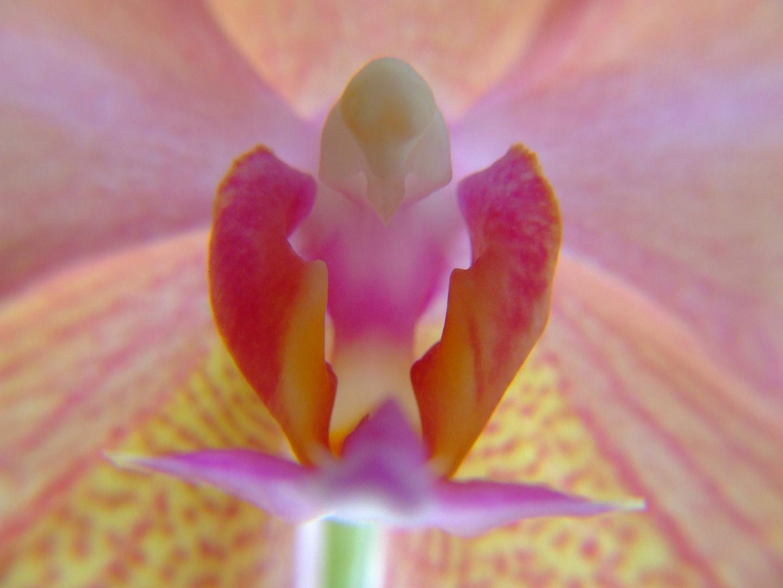 Orchidee - die Weiblichkeit der Natur