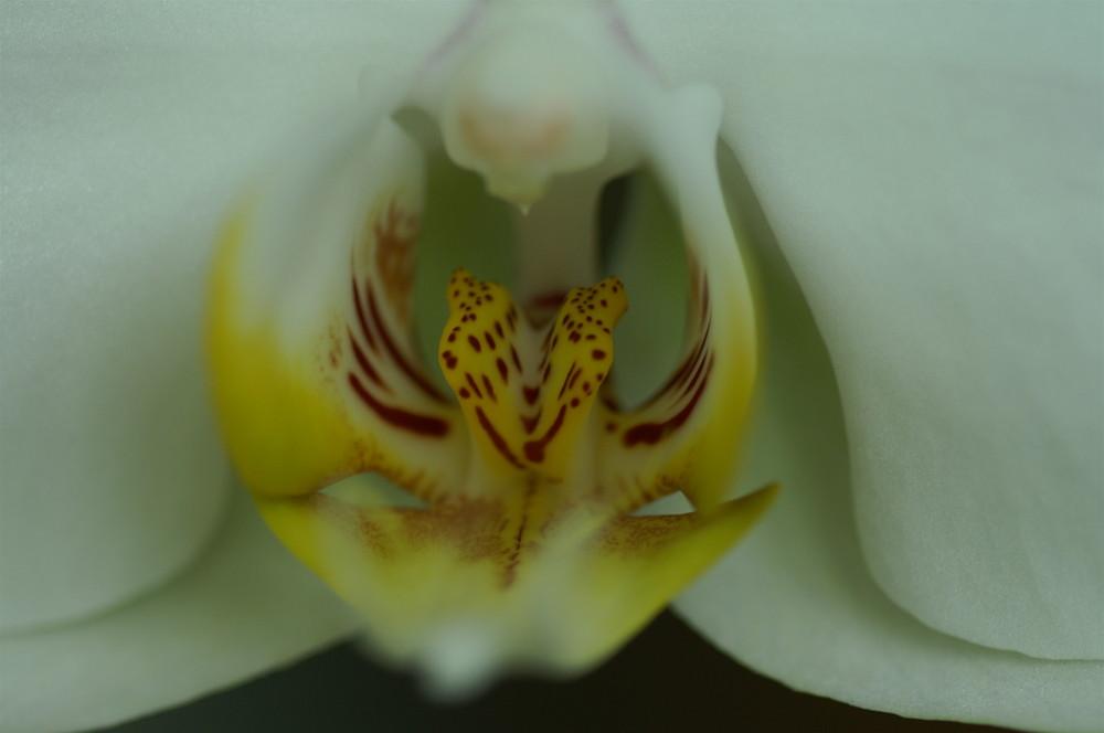 Orchidee die Zierde im Wohnraum