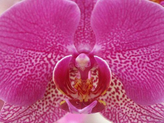 Orchidee die zweite