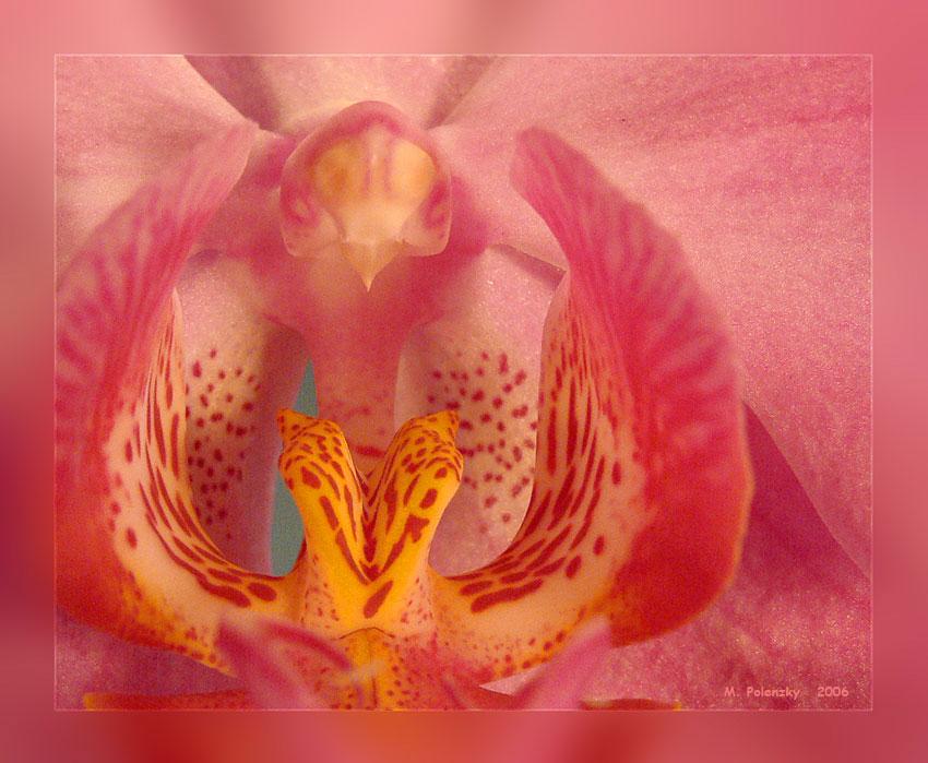 Orchidee durch eine Nahlinse gesehen
