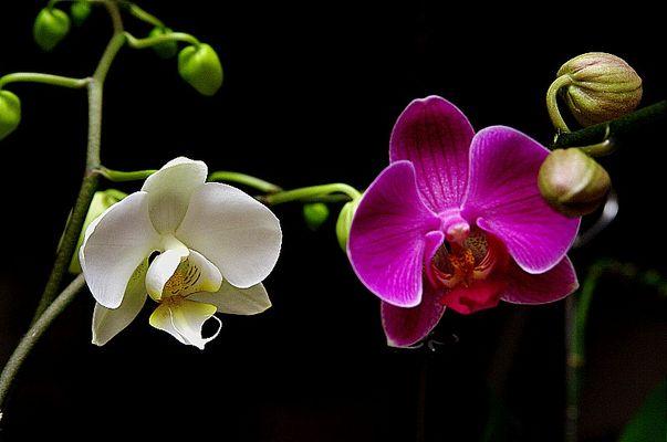 Orchidée en intérieur 2