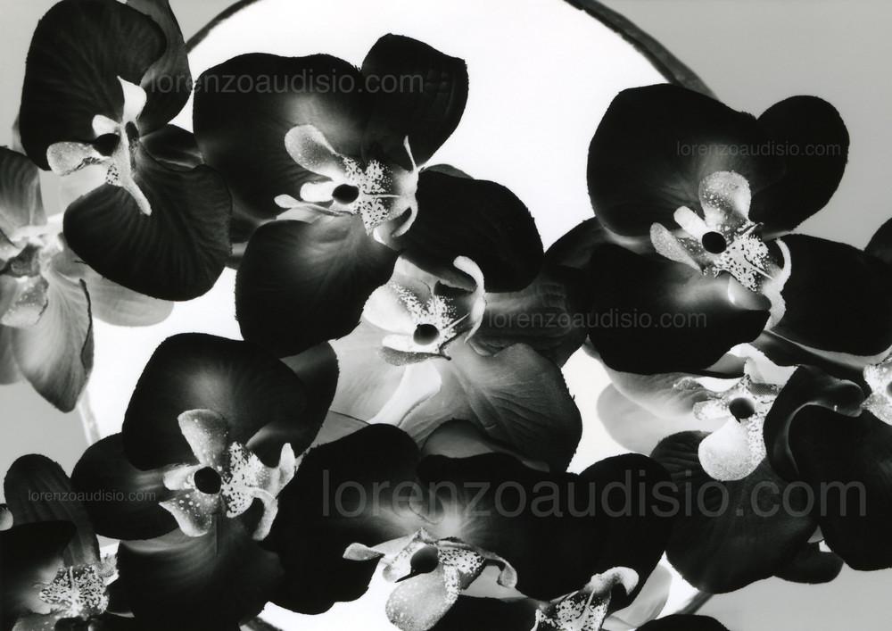 orchidee (fibre sint.)