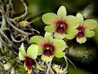 Orchidee für den Sonntag