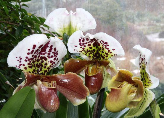 Orchidee im Berggarten