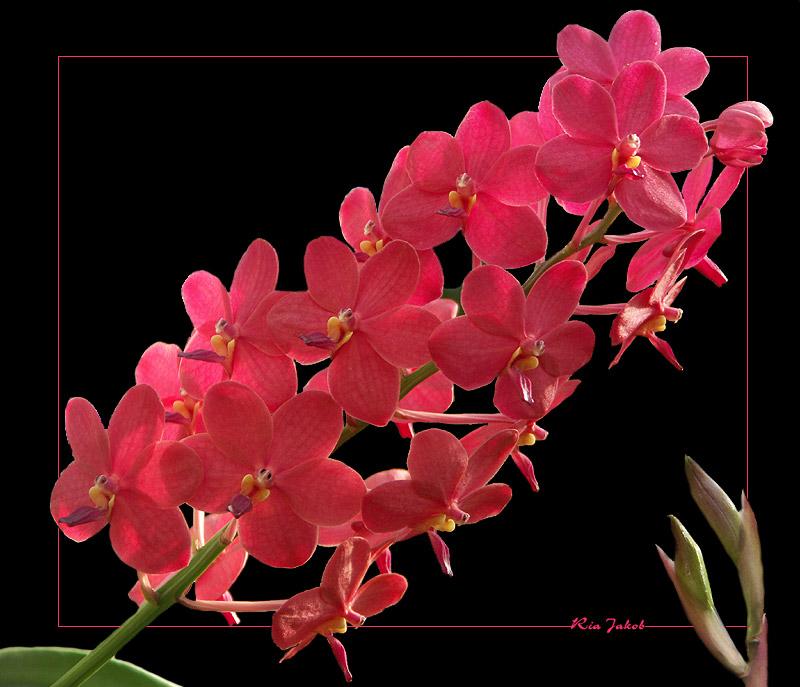 orchidee im botanischen garten