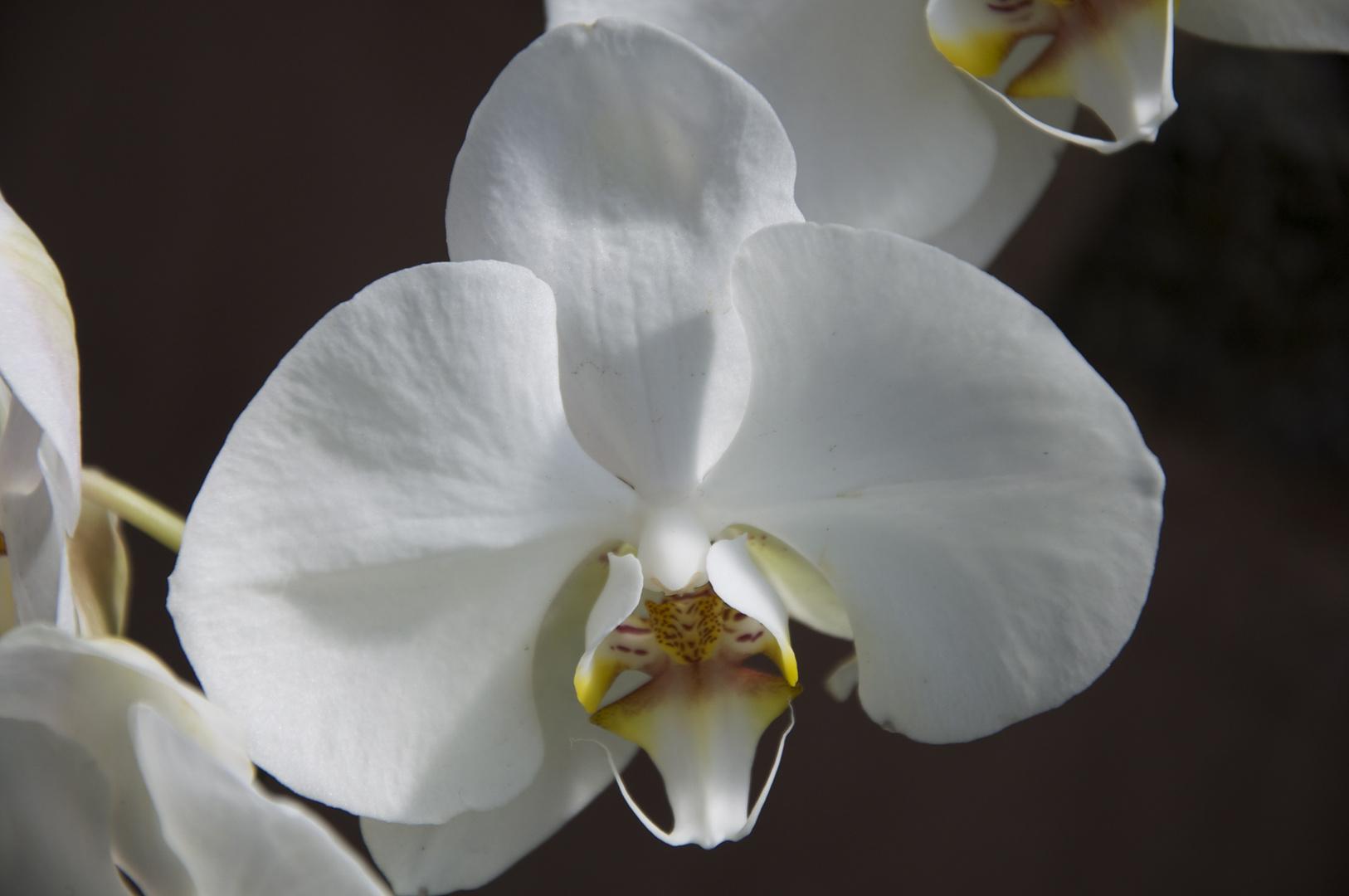 orchidee im botanischen garten... leider die einzige blühende