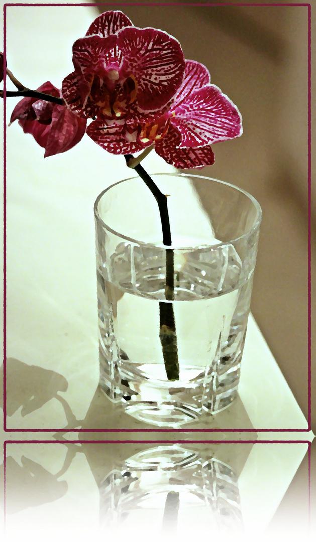 - Orchidee im Glas -