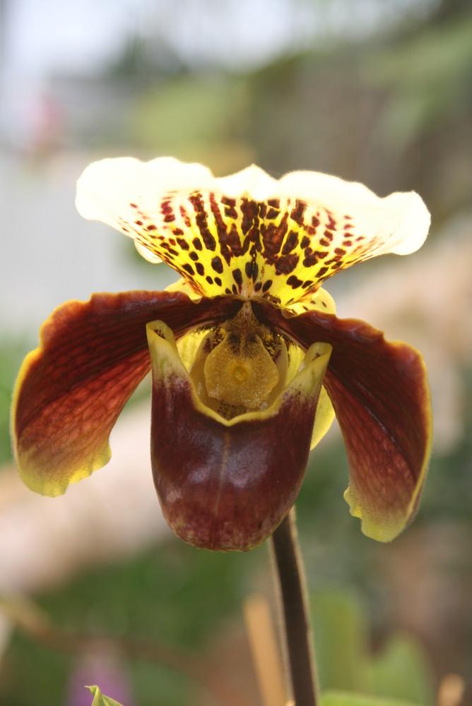 Orchidee im Licht, BUGA 2009 in Schwerin