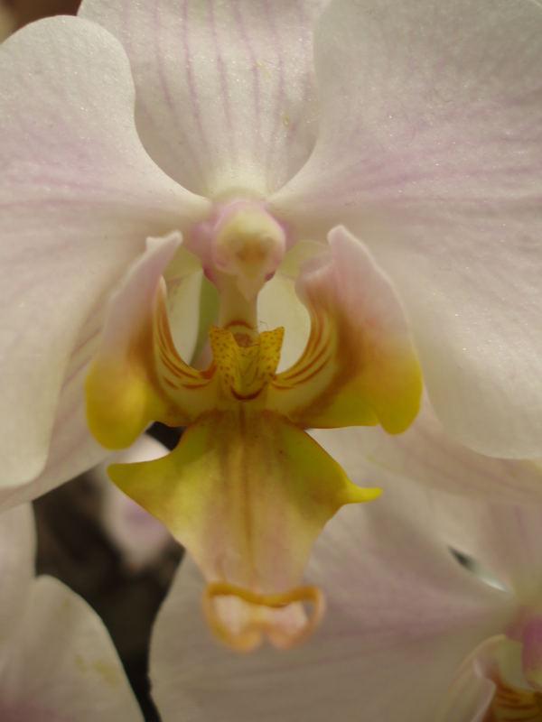 orchidee im P&C