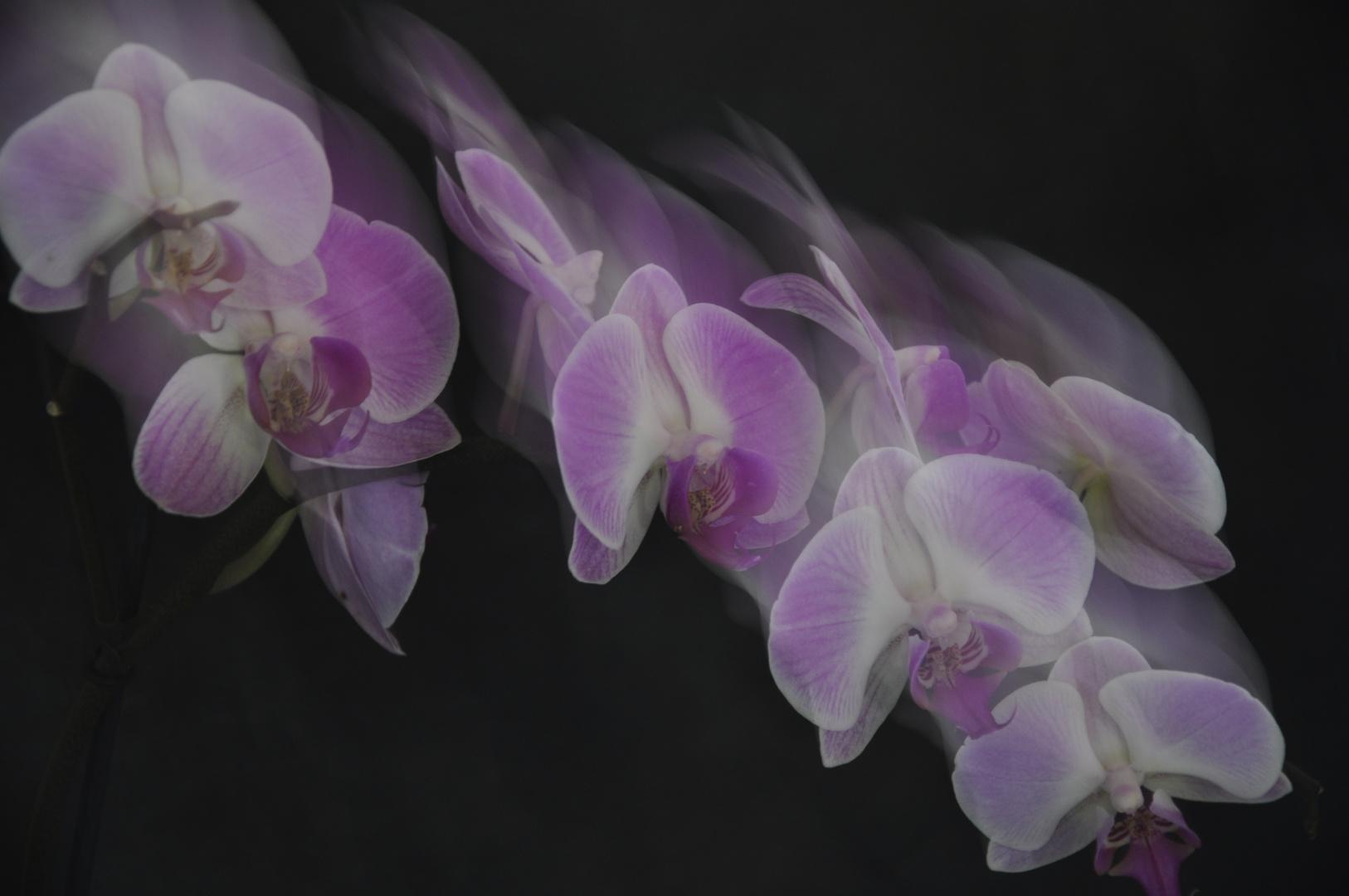 # Orchidee im Rausch...#