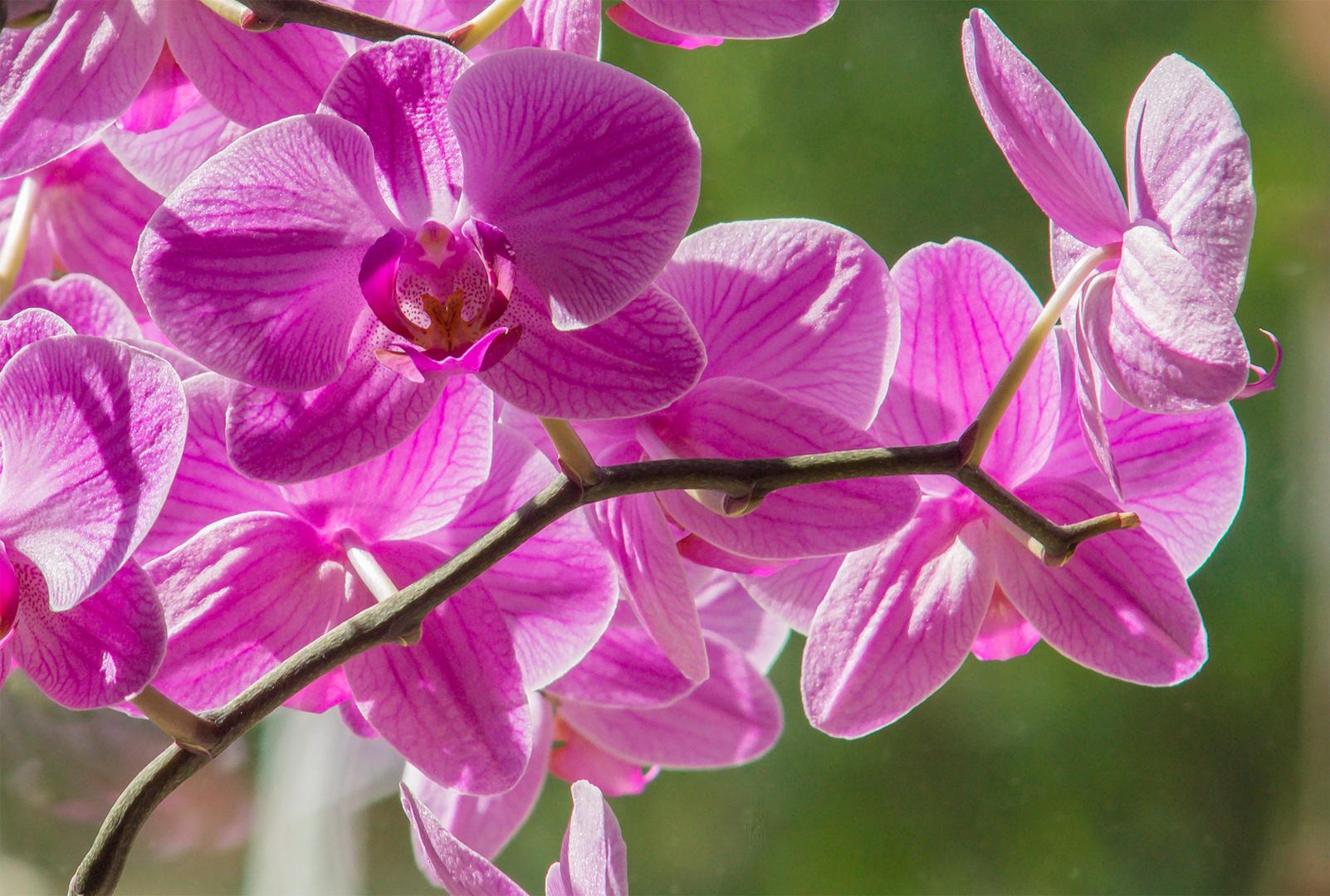 Orchidee im Sonnenlicht