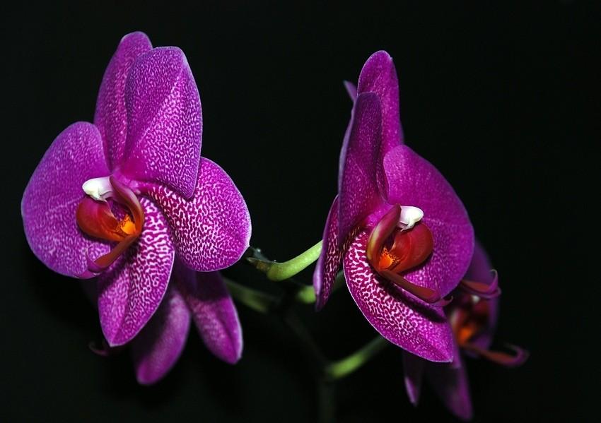 Orchidee in der Nacht