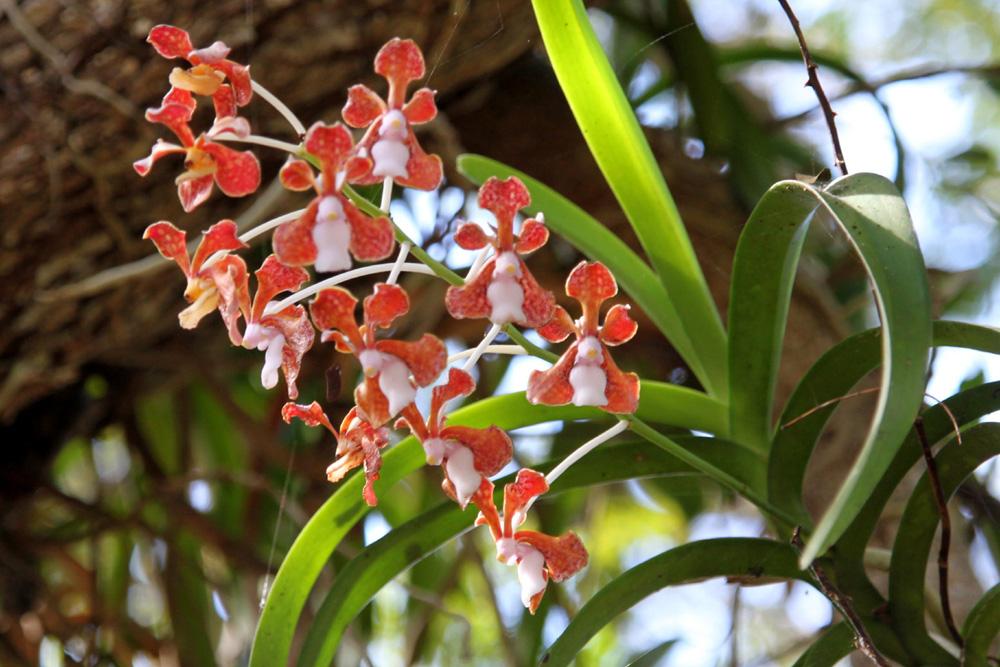 orchidee in der natur ost indonesien foto bild. Black Bedroom Furniture Sets. Home Design Ideas
