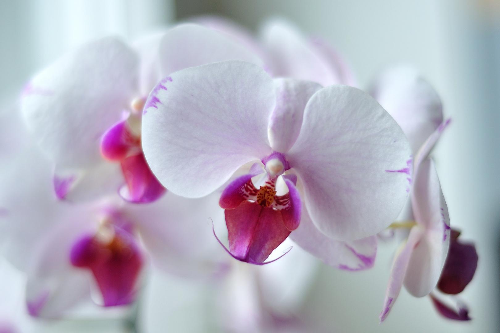 Orchidee jetzt im Winter