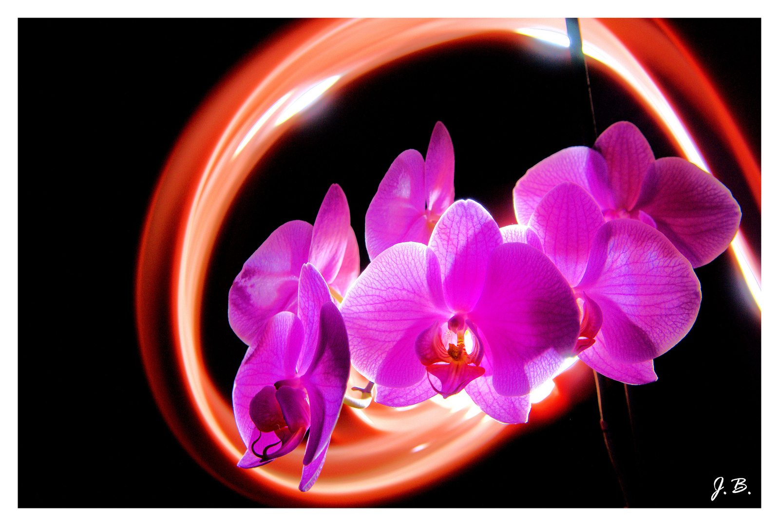 Orchidée light painting
