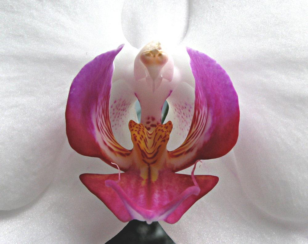ORCHIDEE MAL ANDERS