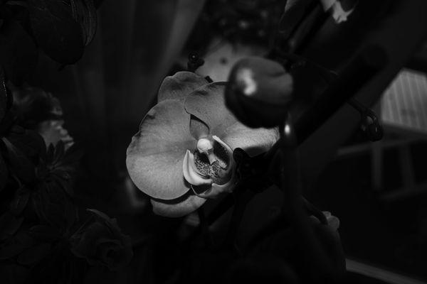 Orchidée NB