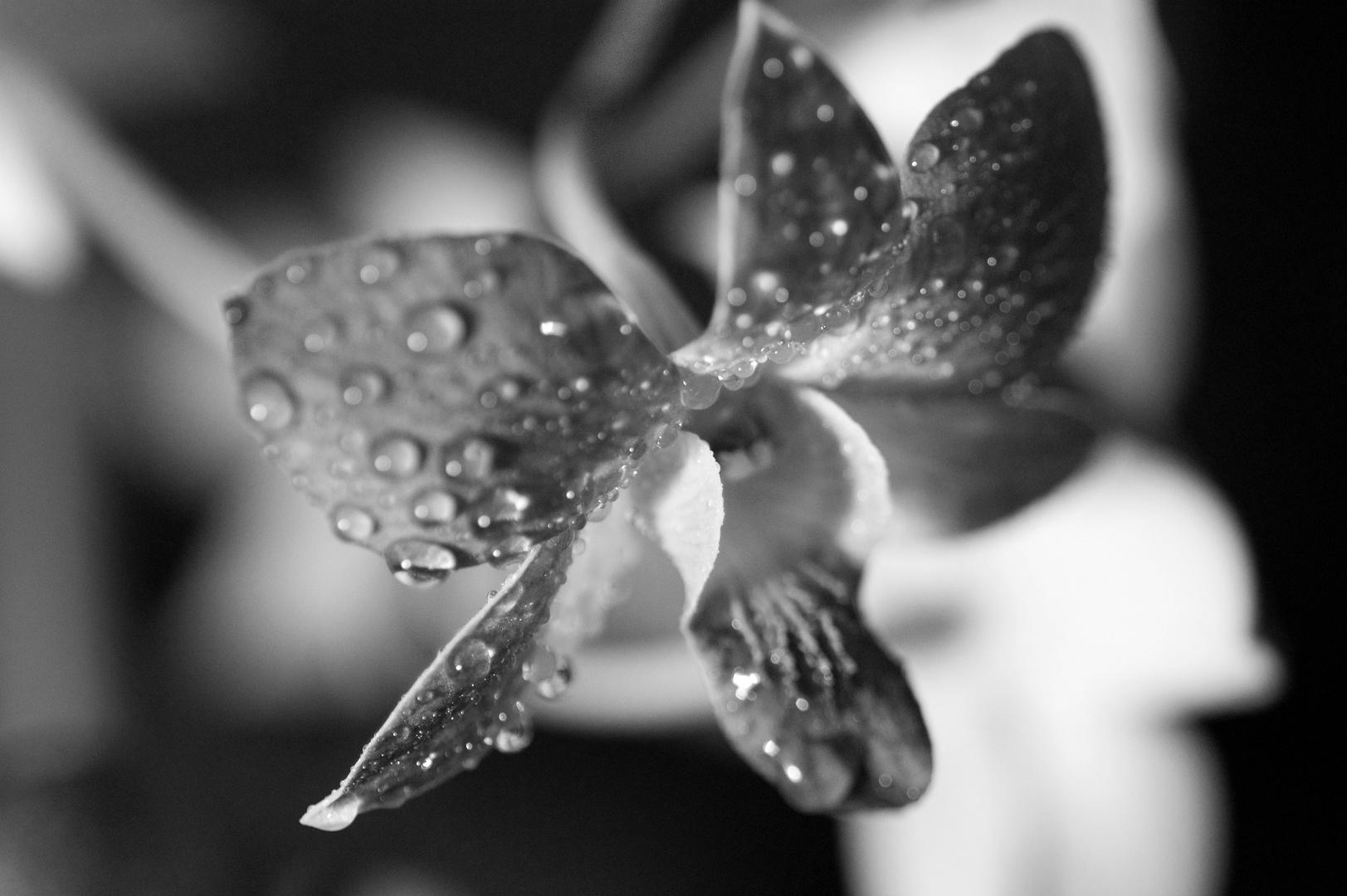 Orchidee Nr. 8
