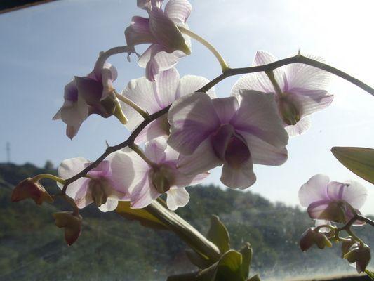 Orchidée prise de dessous illuminé par le soleiL ~~~