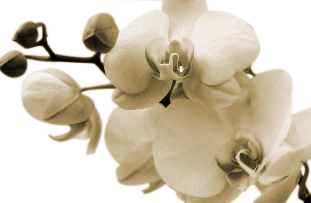 Orchidee-Projekt