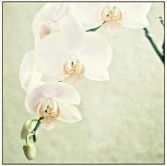 * Orchidee-Romantik *