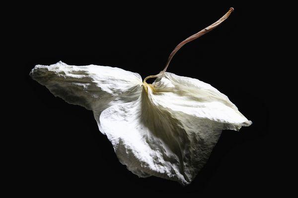 Orchidee verwelken