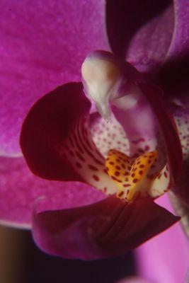 Orchidee von Nah