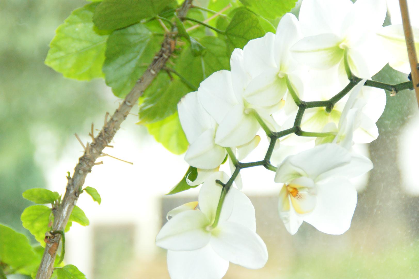Orchidee - Würde mich über 'ne Rückmeldung und Kritik von euch freuen ! :-)