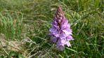 Orchidee zum MIttwoch