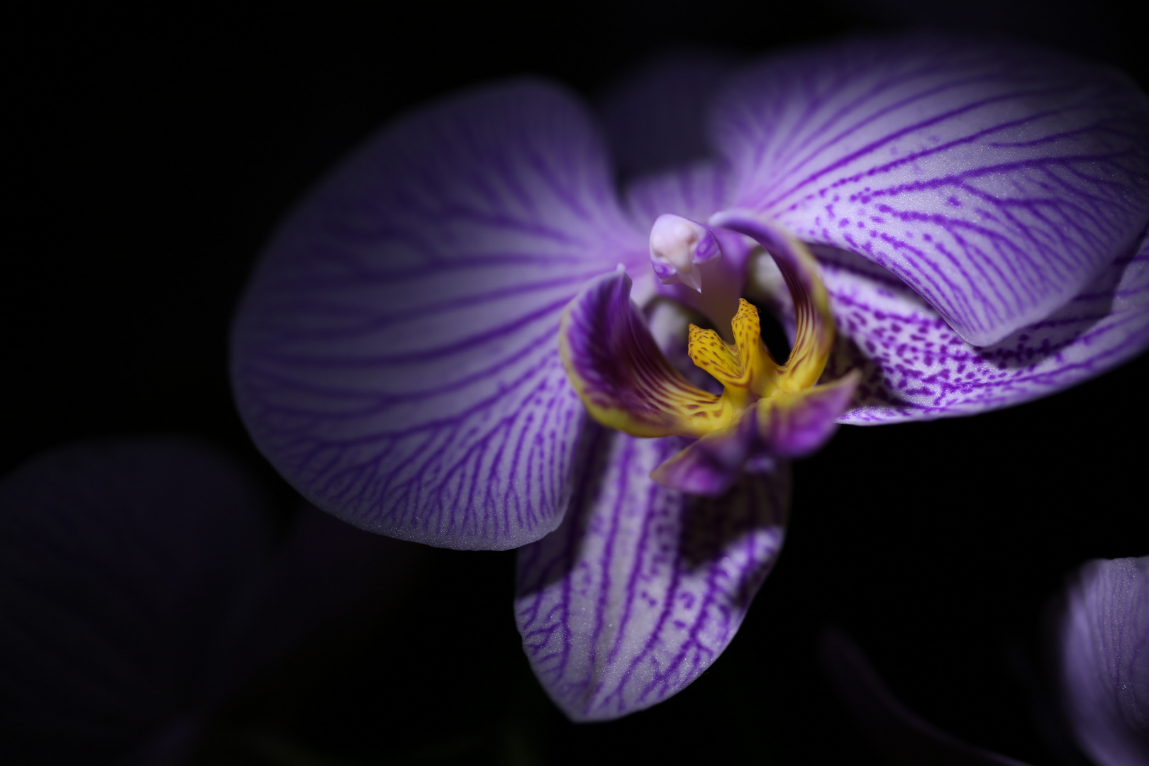 orchidee_3
