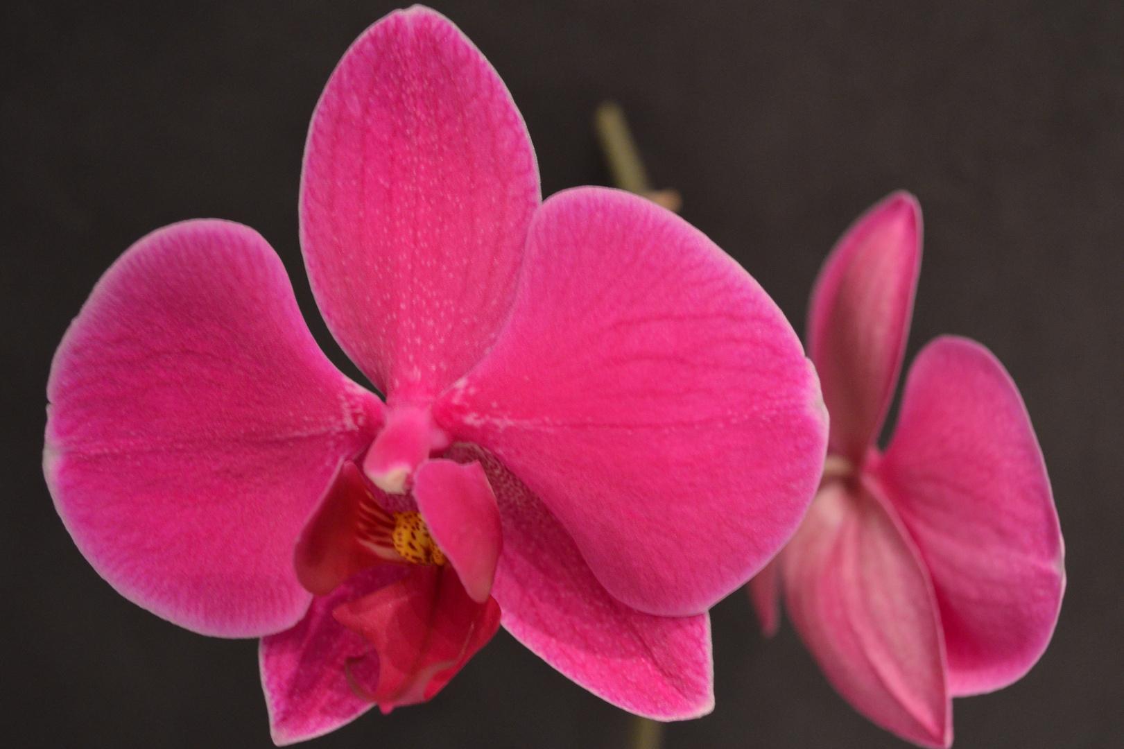 # Orchidee...4#