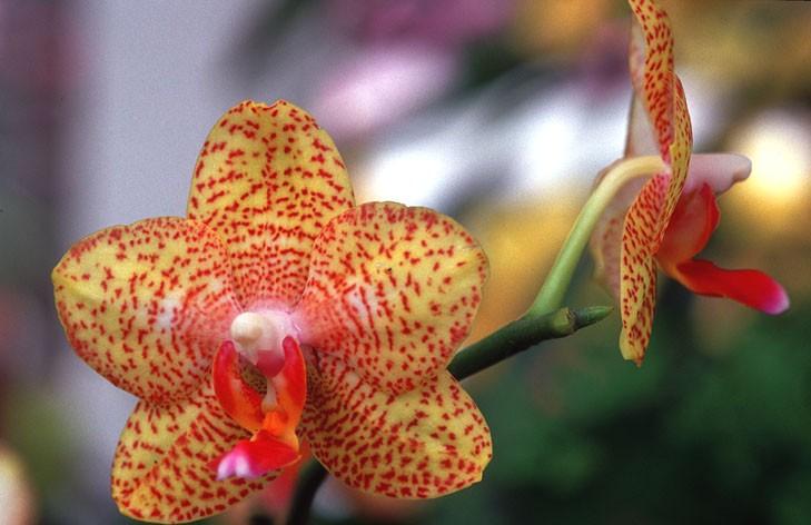 Orchideen 04
