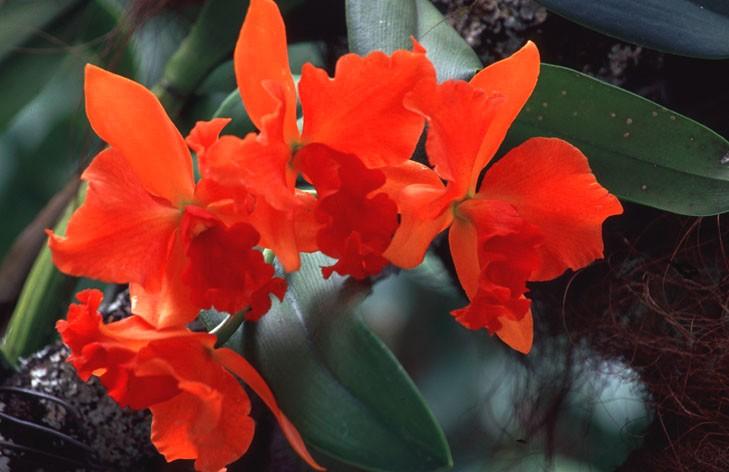 Orchideen 05
