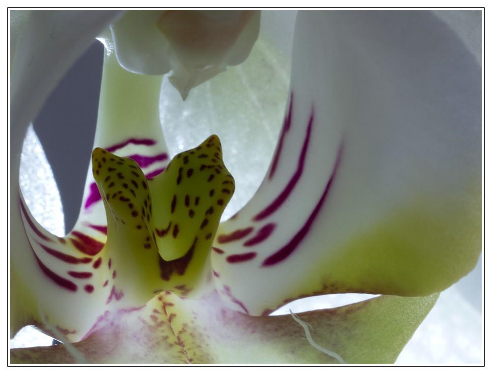 Orchideen #13