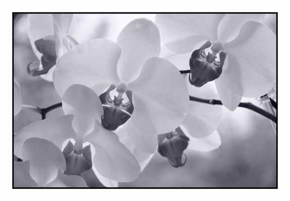 Orchideen auf der Fensterbank