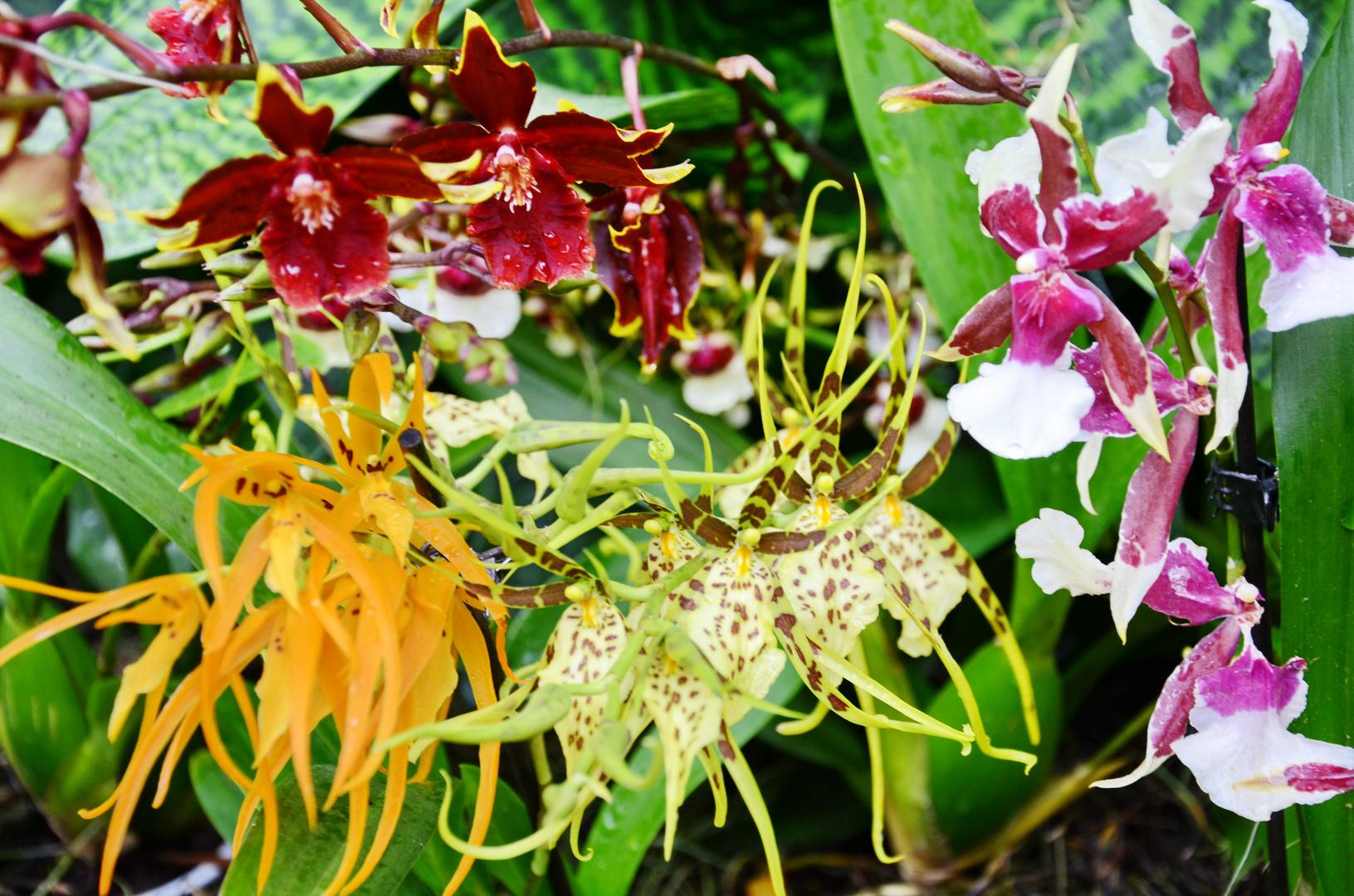 Orchideen auf der Floriade (1)
