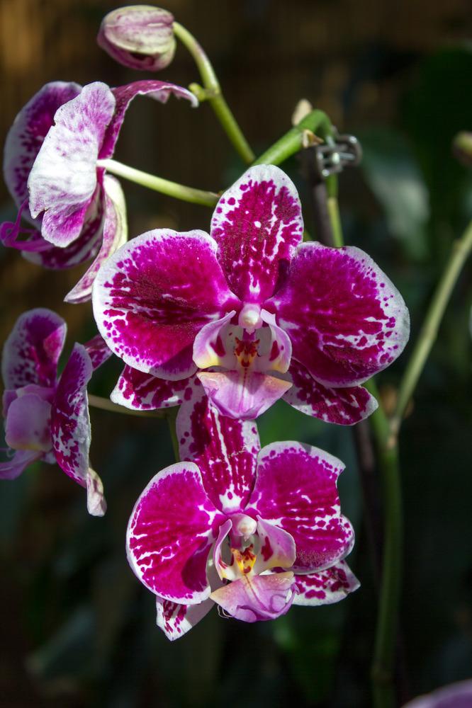 Orchideen Ausstellung in der Biosphäre Potsdam