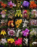 Orchideen-Austellung