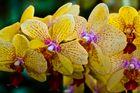 Orchideen beim Gärtner
