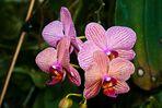 Orchideen Blüte