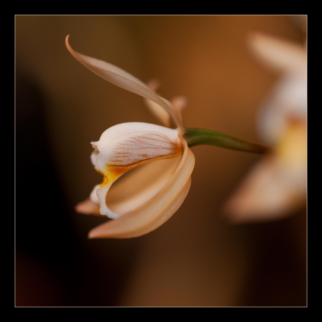Orchideen Blüten Makro