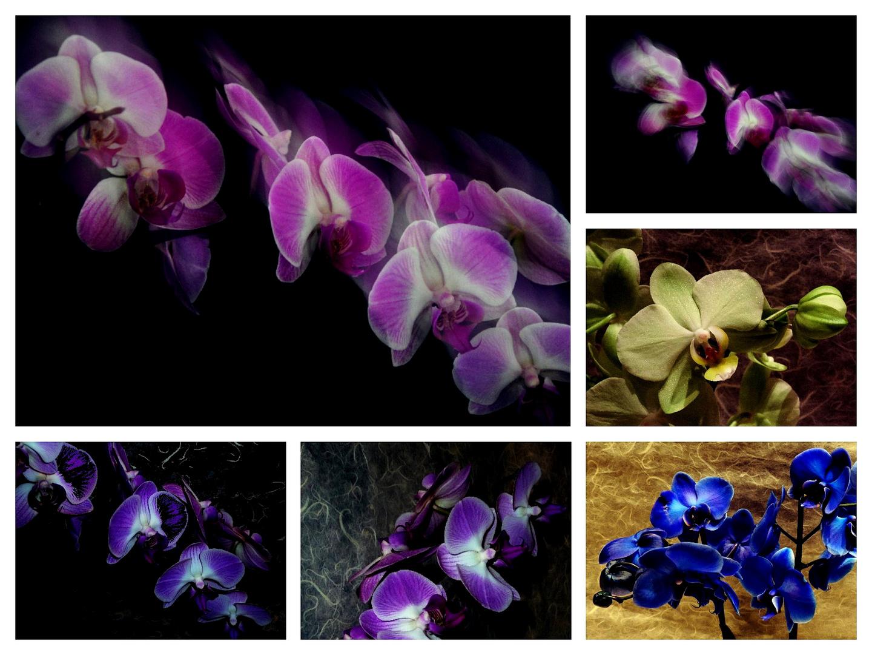 #...Orchideen.......#