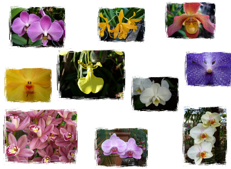 Orchideen-Collage